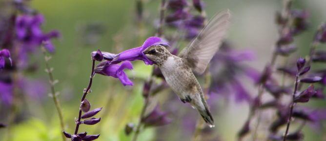 Hummingbird Amistad